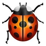 Ladybug emoji