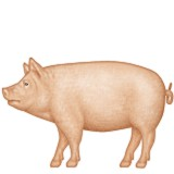 Pig with full body emoji