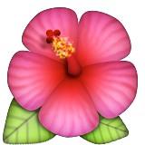 Pink hibiscus emoji