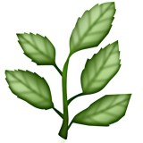Plant with five leaves emoji