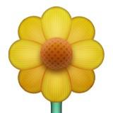 Yellow blossom emoji